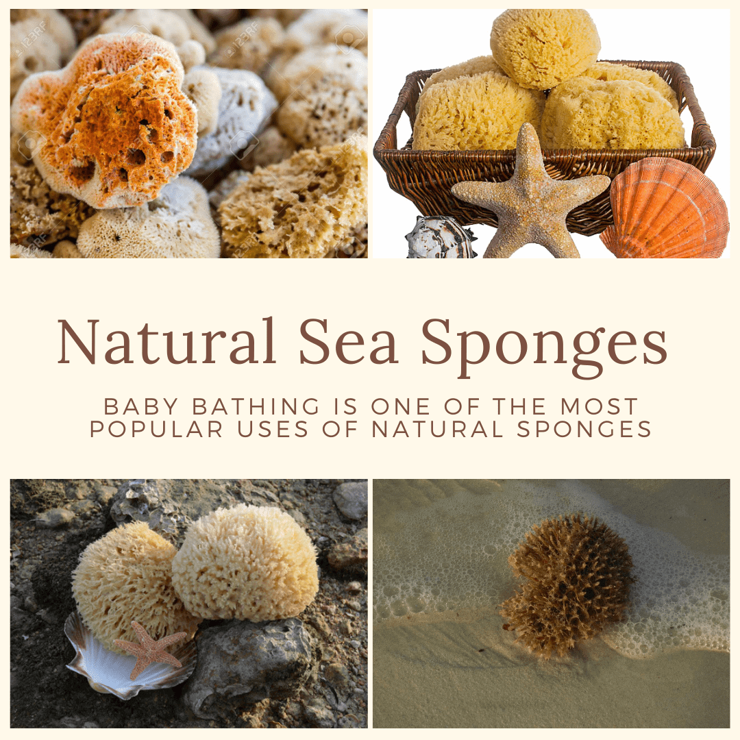 Natural Sea Sponges
